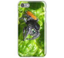 Daring Jumping Spider (Phidippus Audax) iPhone Case/Skin