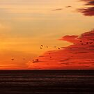Seagull Silhouettes At Sunset by Annie Underwood