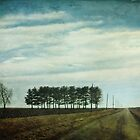 Stand of trees by Lynn Starner