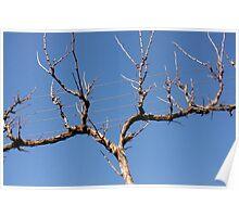 Bare Vine - Winter, Sinclair's Gully, Norton Summit, Adelaide Hills Poster
