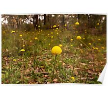 Yellow Button Flowers, Sinclairs Gully, Norton  Summit, Adelaide Hills Poster