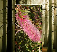 Red Wattle Bloom Cellphone Case 20b by Gotcha29