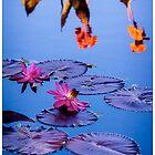 Water Lily by Jarrett720