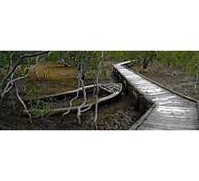 Marooned by Mangrove Photographic Print