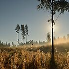 Morning Mist - Finland by Kasia Nowak