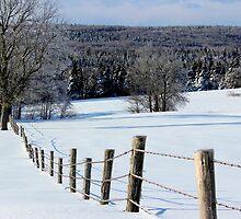 Winter Fields by Kathleen Daley