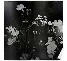 « fleurs blanches » Poster