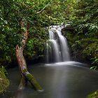 Sydney Waterfalls - Berowra Creek III by vilaro Images
