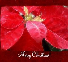 Mottled Red Poinsettia 2 Merry Christmas P5F1 by Christopher Johnson