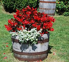 Flower Barrel by Myscha Theriault