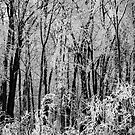 The Elfish Forest by Joanne  Bradley