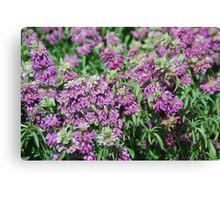Herbal Delights of Cape Breton Canvas Print