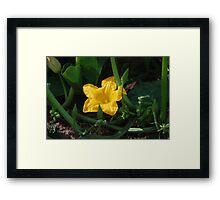Cape Breton Squash Blossom Framed Print
