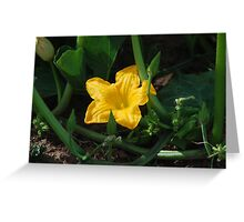 Cape Breton Squash Blossom Greeting Card