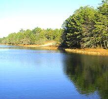 Pond Shimmered In Sunlight by CapeCodGiftShop