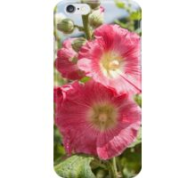 Pink Hollyhock I iPhone Case/Skin