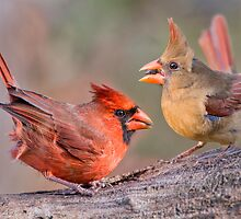 Cardinals on a Windy Day by Bonnie T.  Barry