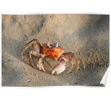 Crab on a Beach Poster