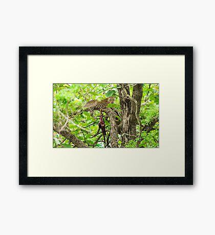 Leopard's lair Framed Print