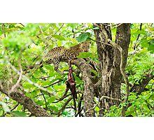 Leopard's lair Photographic Print