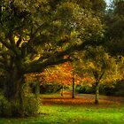 Castle Grounds, Ireland by Timothy Denehy
