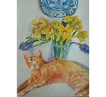 Ginger Cat and Daffodils Photographic Print