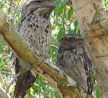 Father and Son by stevealder