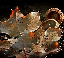 Fallen by Lynnette Peizer