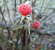 Frost covered rosehip by Leyh