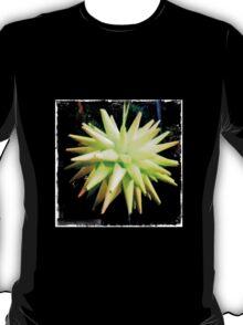 Bordered Paper Star Ball T-Shirt