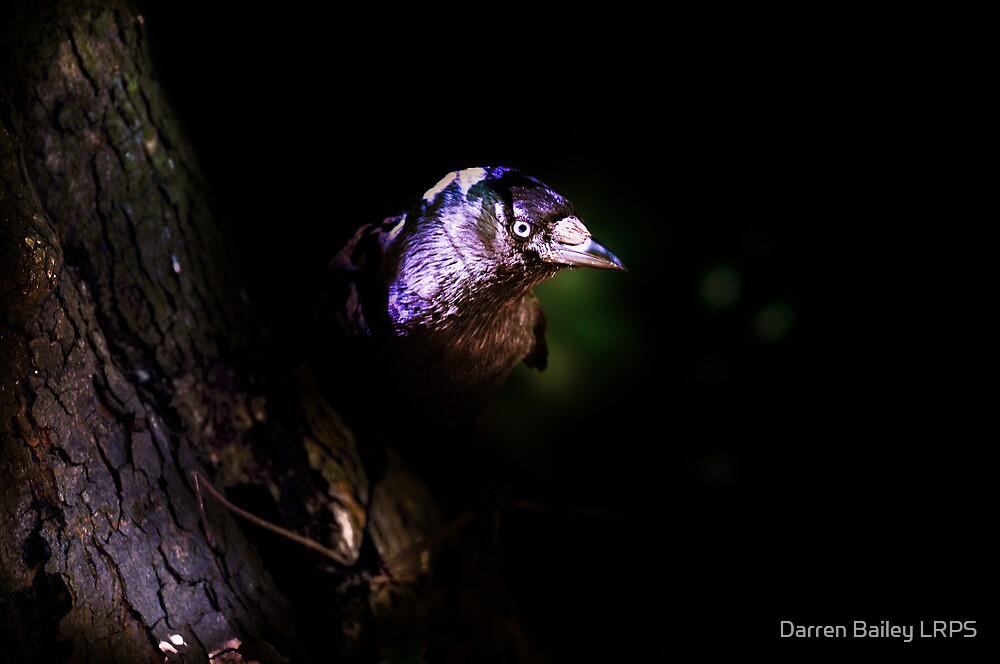 The Vain Jackdaw by Darren Bailey LRPS