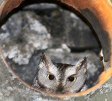 Peek by Steve Small