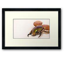 Summer Christmas Beetle Framed Print