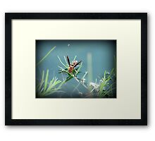 Sipping Paper Wasp  Framed Print