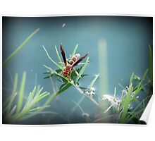 Sipping Paper Wasp  Poster