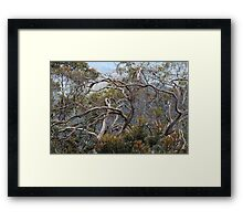 Australiana No. 1 Framed Print
