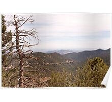 Gila Forest Poster