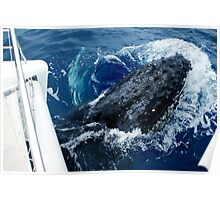 Contact With Whale Poster