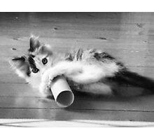 Playful Photographic Print