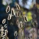 Graceful Grasses 2 by Georgie Hart