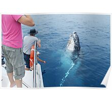Whale saying Cheese Poster