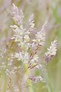 Graceful Grasses 3 by Georgie Hart