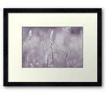 Summer Fields I Framed Print