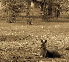 Kangaroos by Jeanne Peters