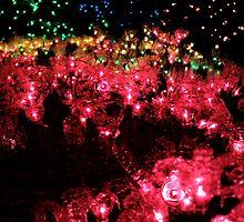 Christmas Lights - Milner Gardens  by rsangsterkelly