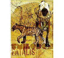 Smilodon fatalis Photographic Print