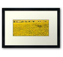 Canola fields in NSW  Framed Print