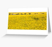 Canola fields in NSW  Greeting Card