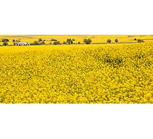 Canola fields in NSW  Photographic Print