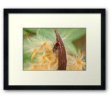 Boxelder Bug 3 Framed Print
